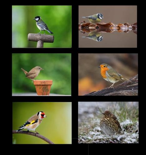garden bird placemats
